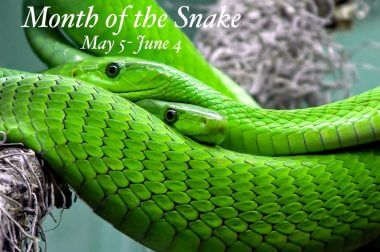 Month of the Snake